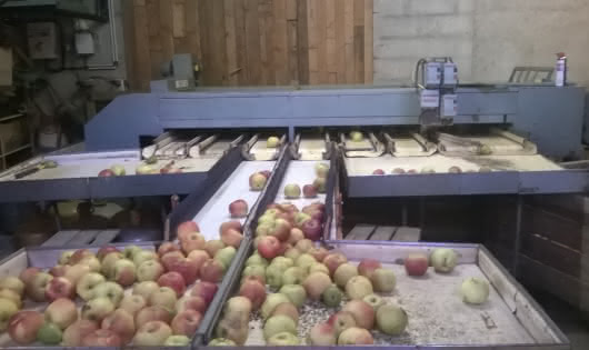 Tri des pommes