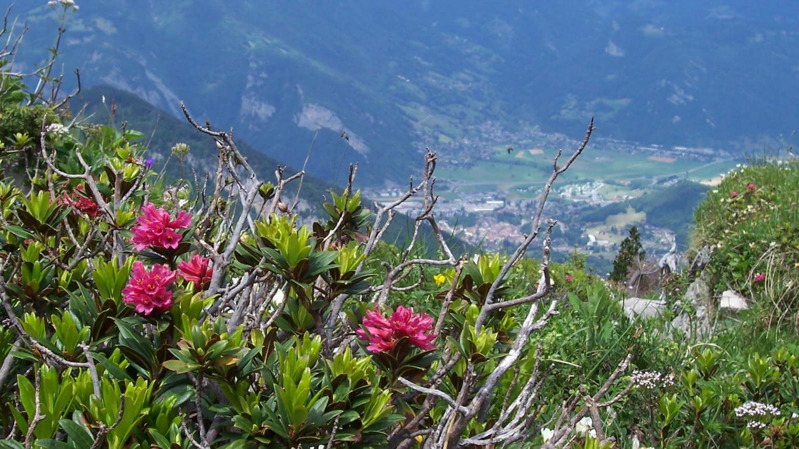 Vue du sentier botanique