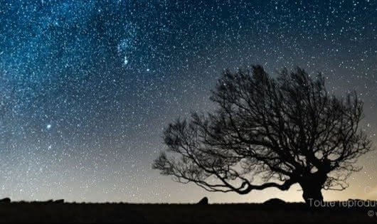 arbre-cosmique-cevennes