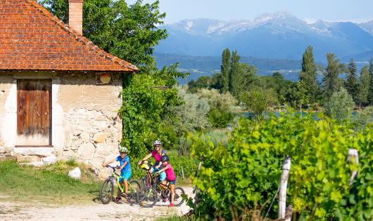 A vélo le long des vignes