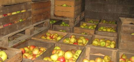 Conservation des pommes