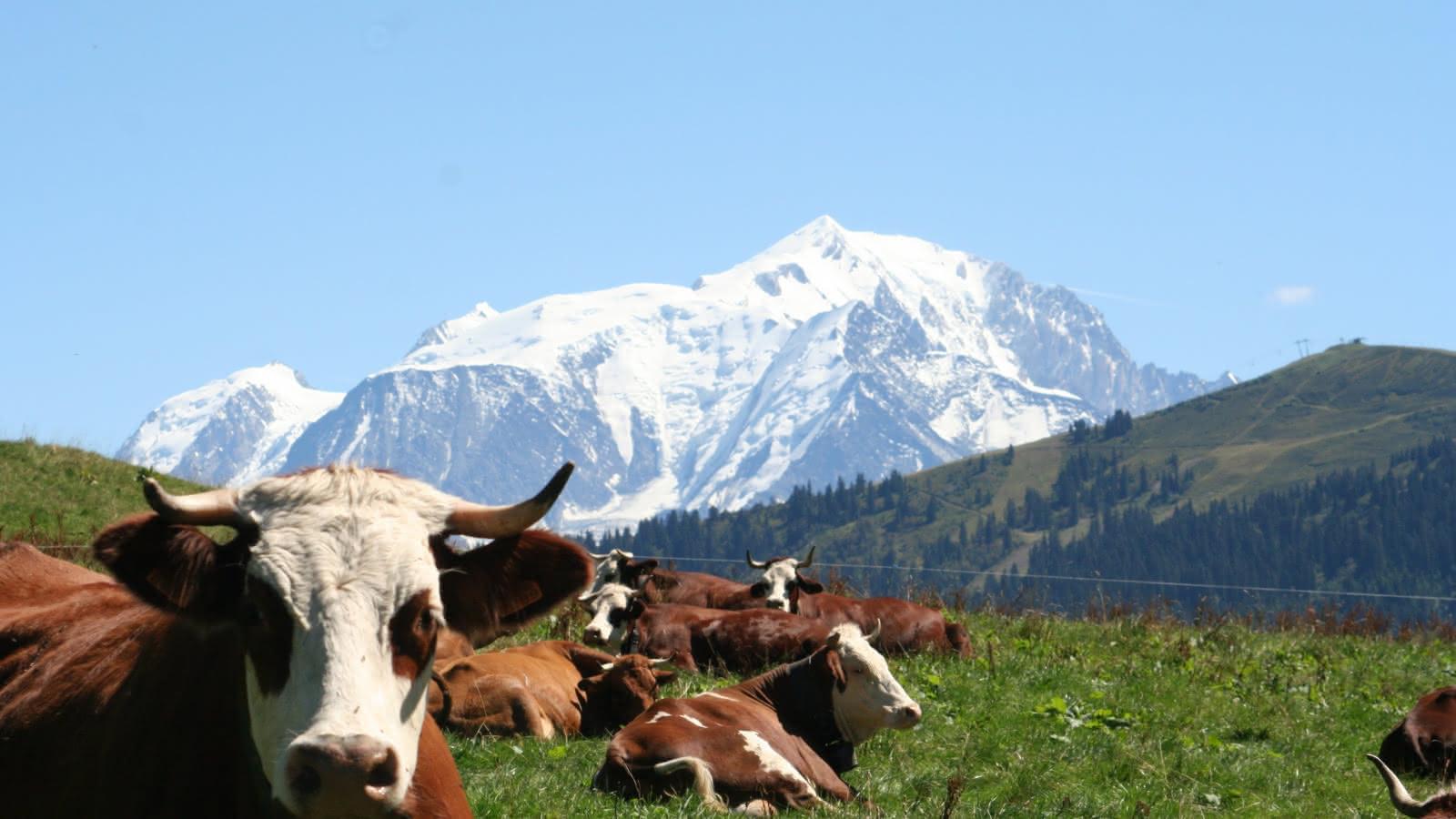 Le Mt Blanc
