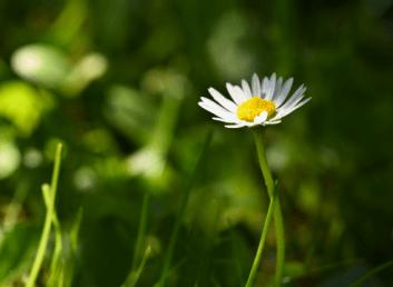 À la découverte des fleurs et des plantes