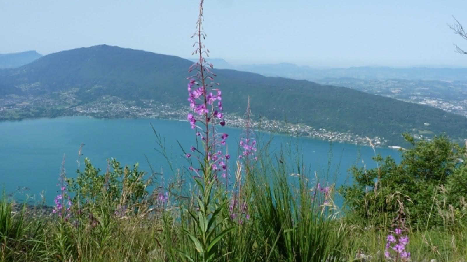 Vue sur le lac  annecy depuis le Mont Veyrier