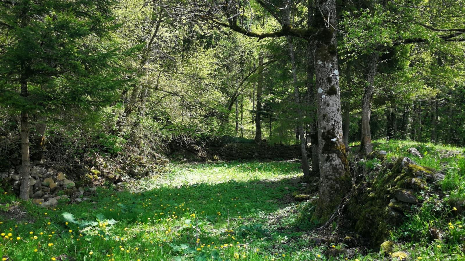 forêt Les Combes